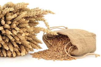 小麦低聚肽oem代工